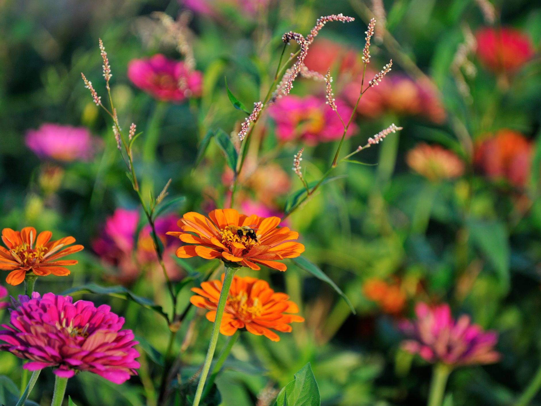 An Introduction To Annual Plants