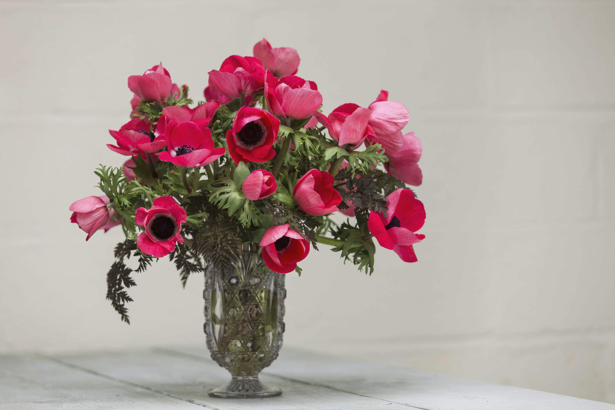 Anemone flowers in a vase