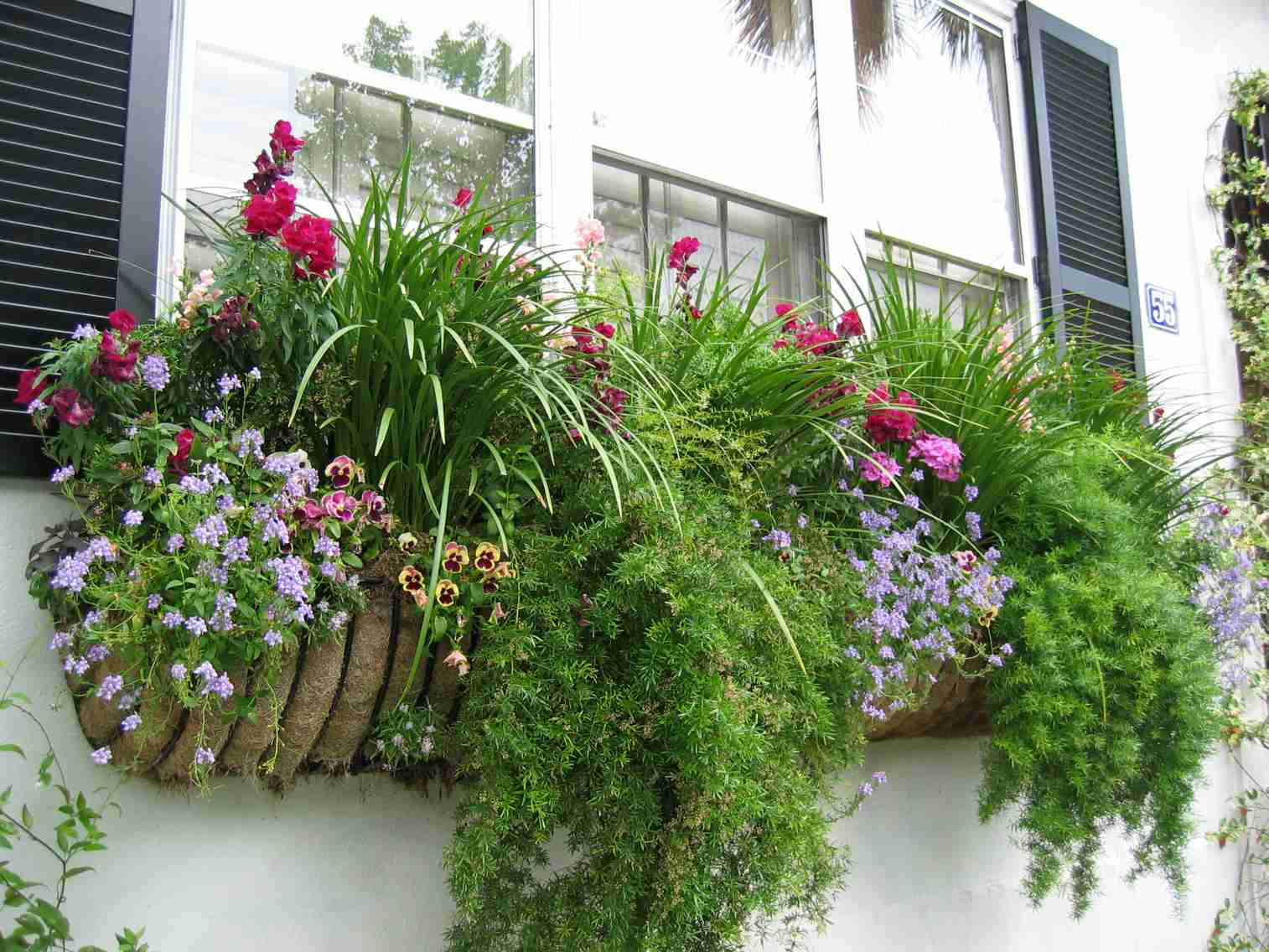 spring window box with lots of plants