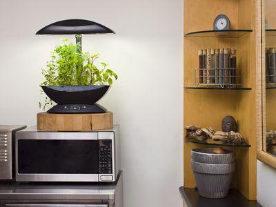 Herb garden in an apartment kitchen