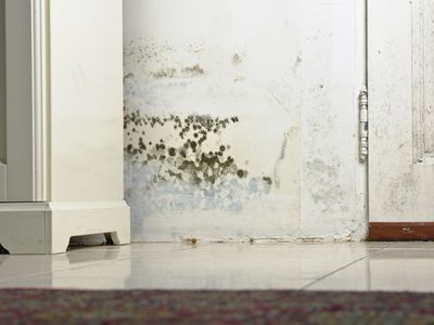 Learn About Mold Resistant Drywall And How Well It Works