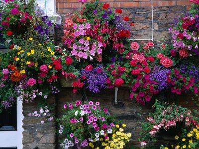 Flowering Hanging Basket Ideas