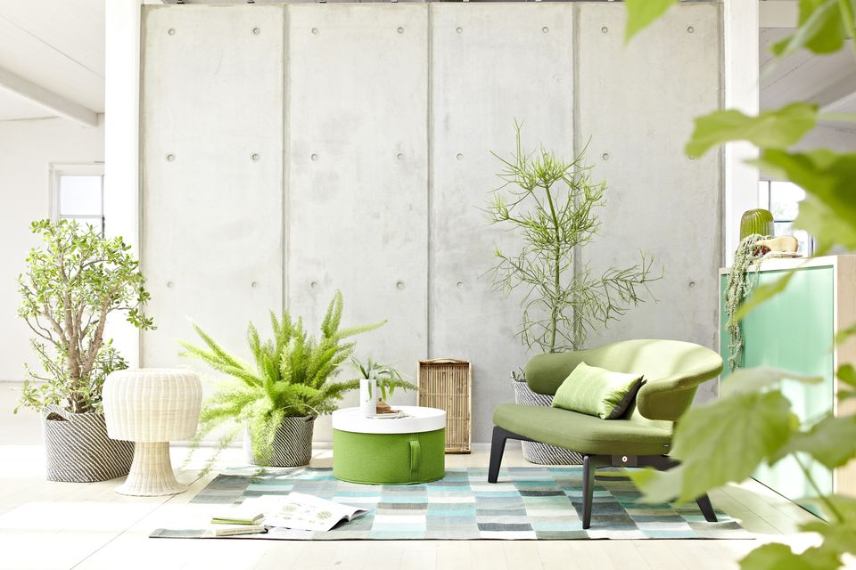 Wohnraum mit Zimmerplanzen, living room with plants