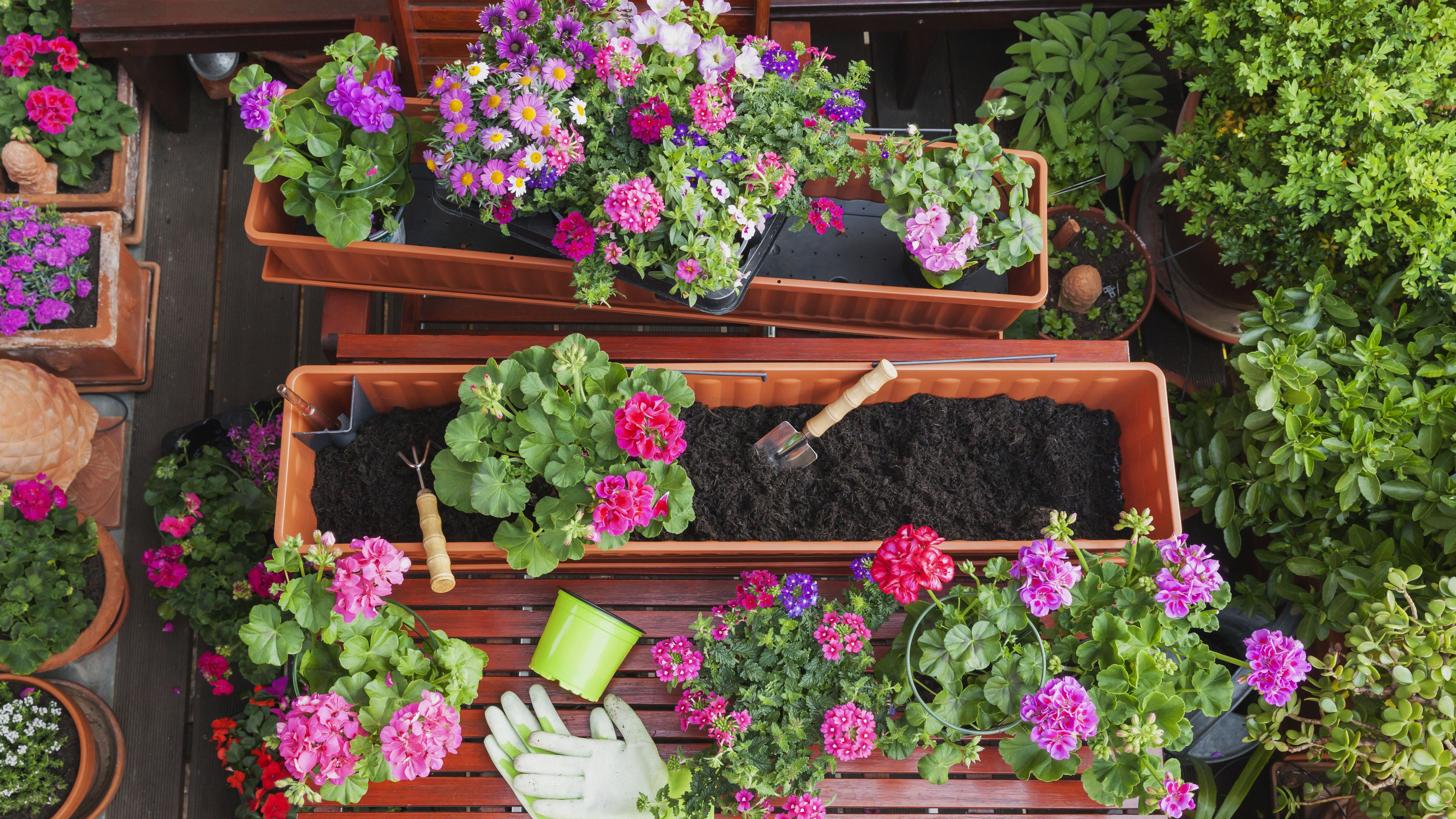 24 Of The Best Spiller Plants For Container Gardens