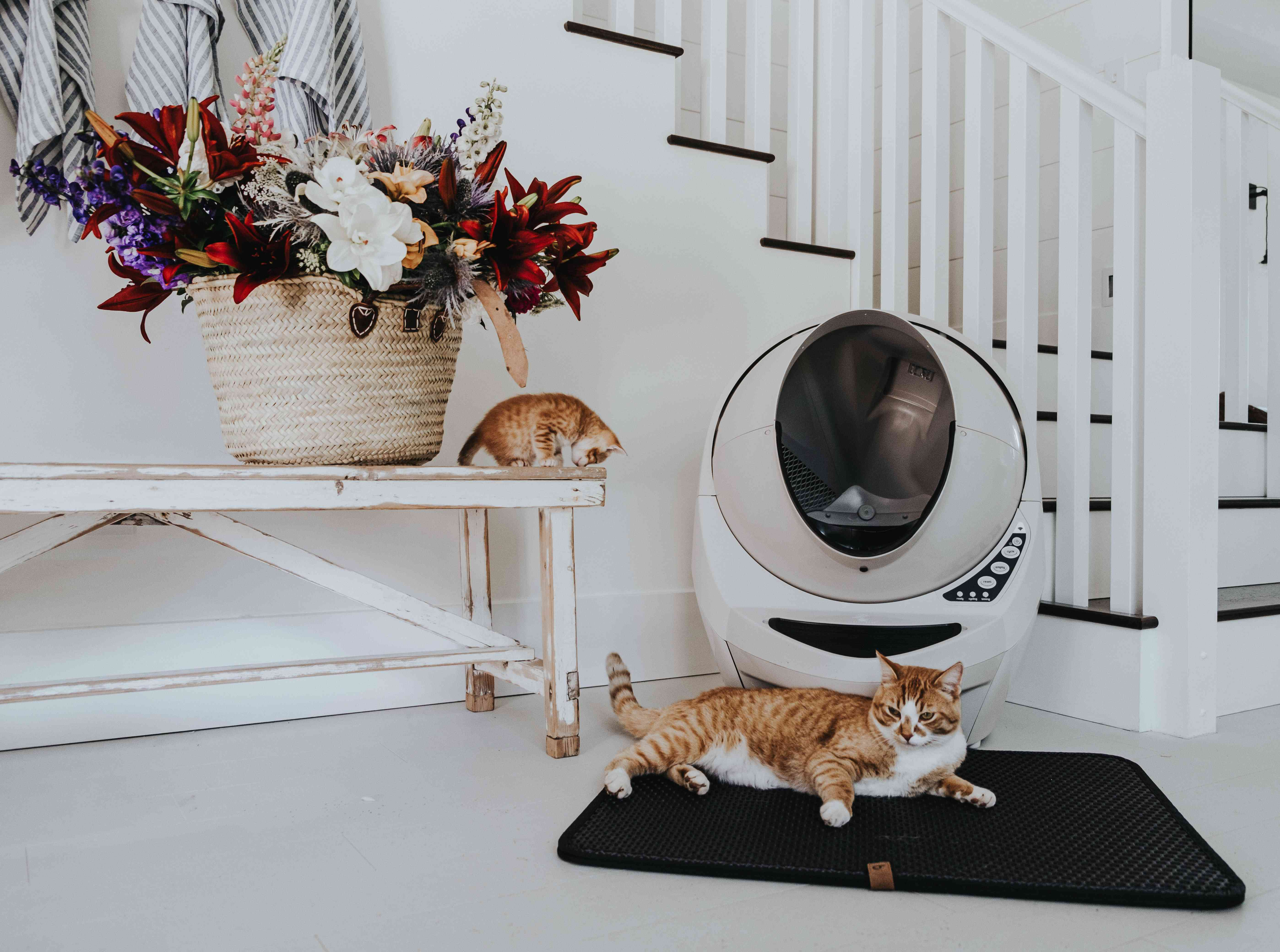 litter box in a home
