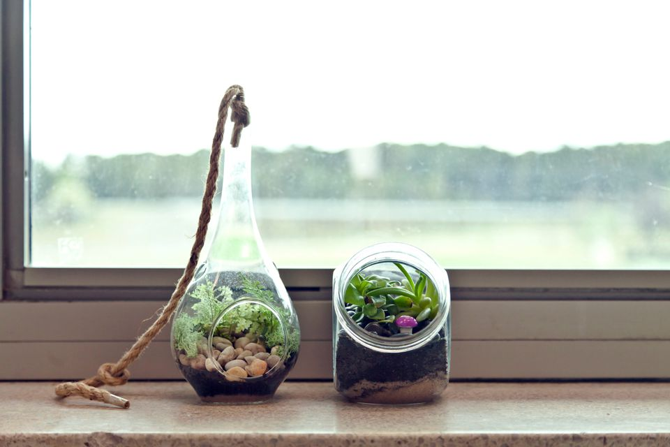 Terrariums feature all sorts of shapes, sizes, and contents