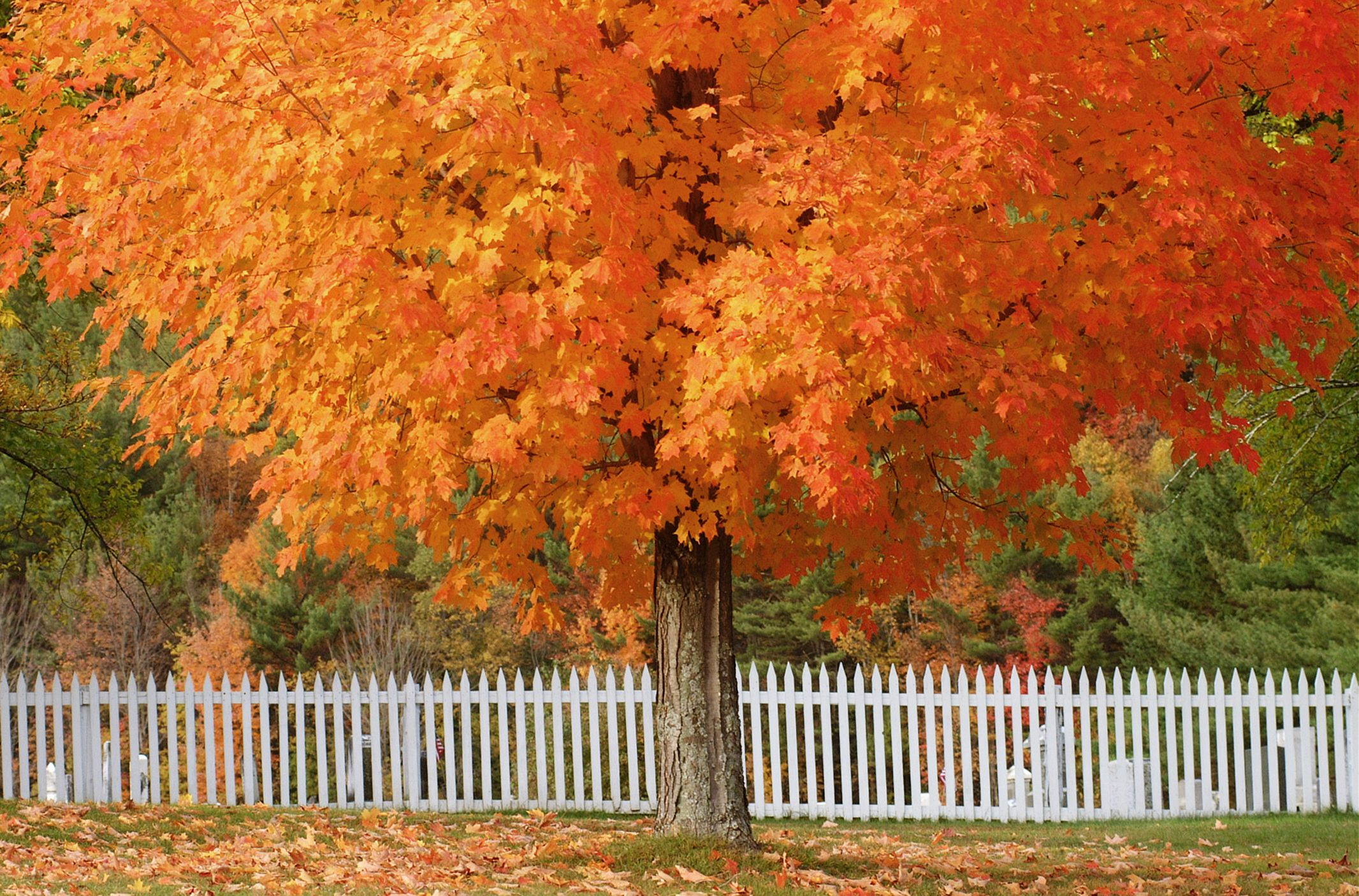 12 Trees With Brilliant Fall Color Plus