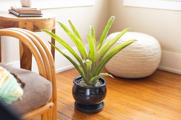 urn plant