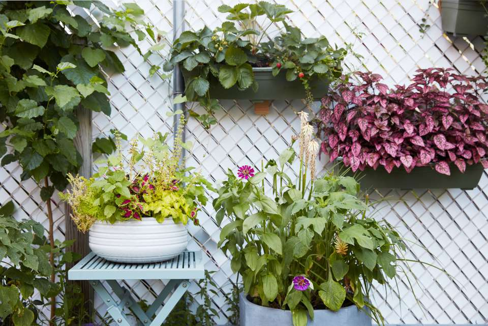 patio fence with planters and greenery