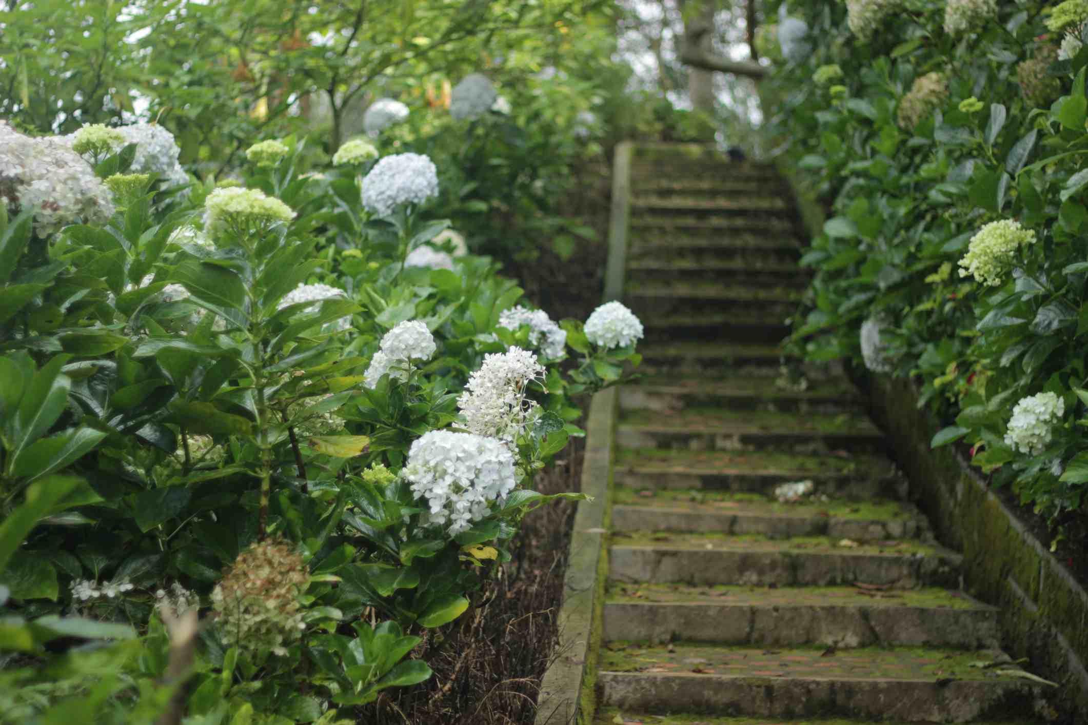 Pasos de jardín de flores