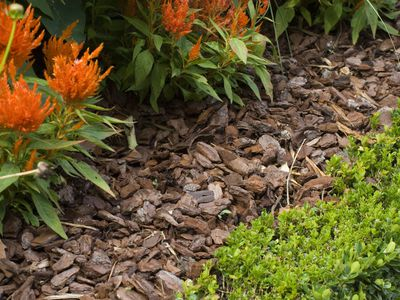 How to Get Free Mulch from 5 Different Sources