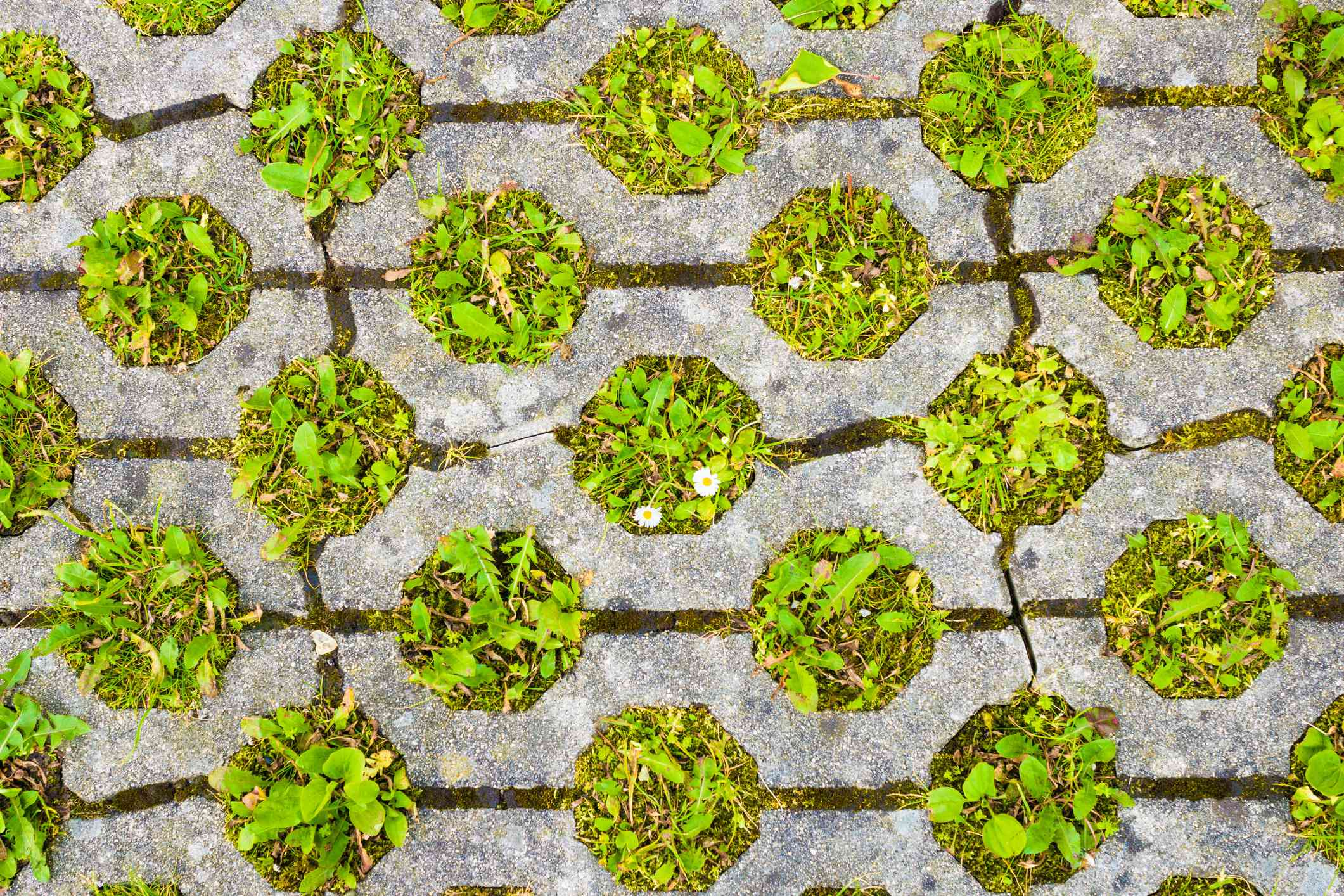 Permeable pavement with grass. Eco friendly parking