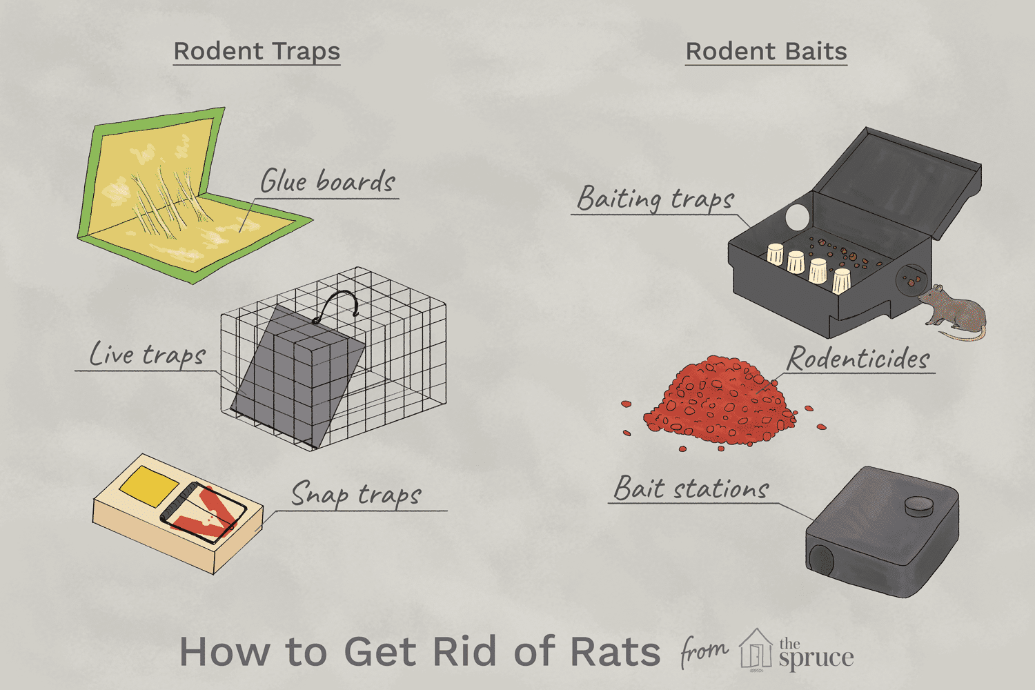 How To Get Rid Of Rats The 2 Best Ways