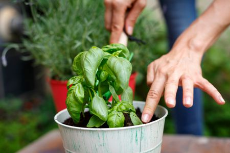 5 compelling reasons to start your herb garden now - How To Start An Herb Garden