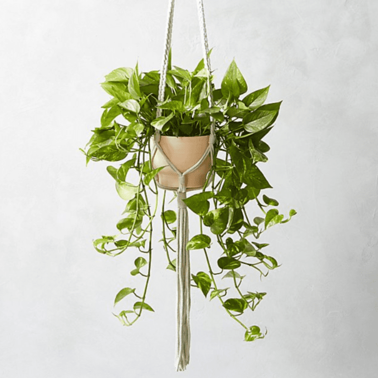 macramé plant holderCB2 Exclusive