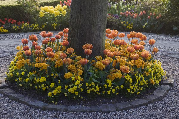 Circular bed planted with tulips, primrose, and pansies