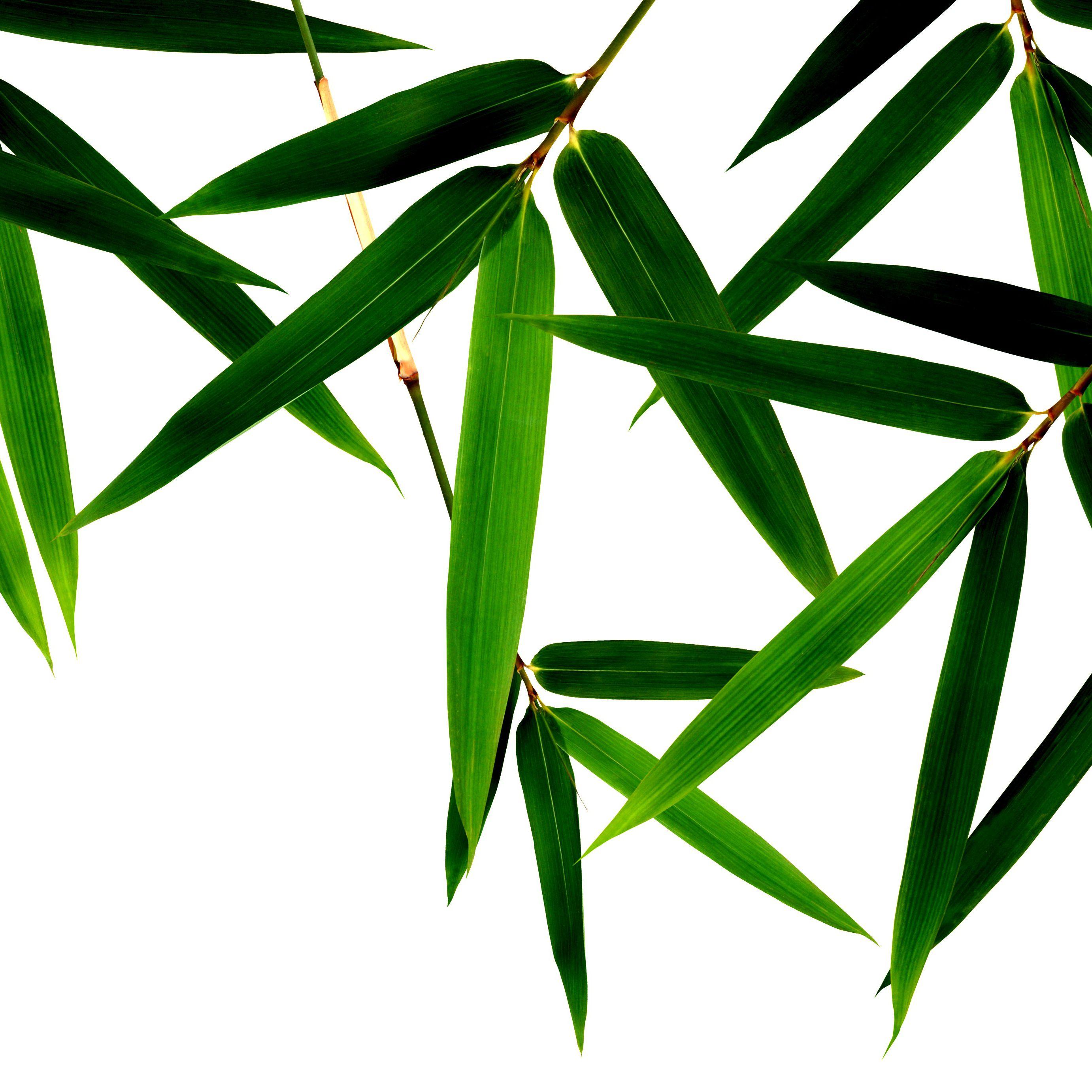Growing Bamboo Inside