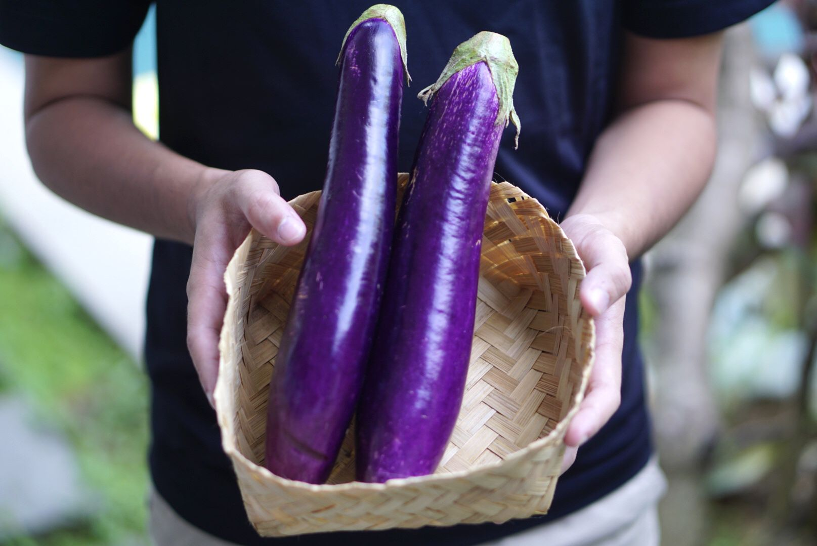 Two long purple eggplants carried in woven basket by hand