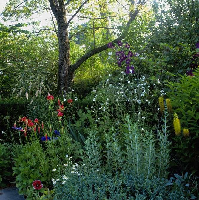 Jardín de lirios