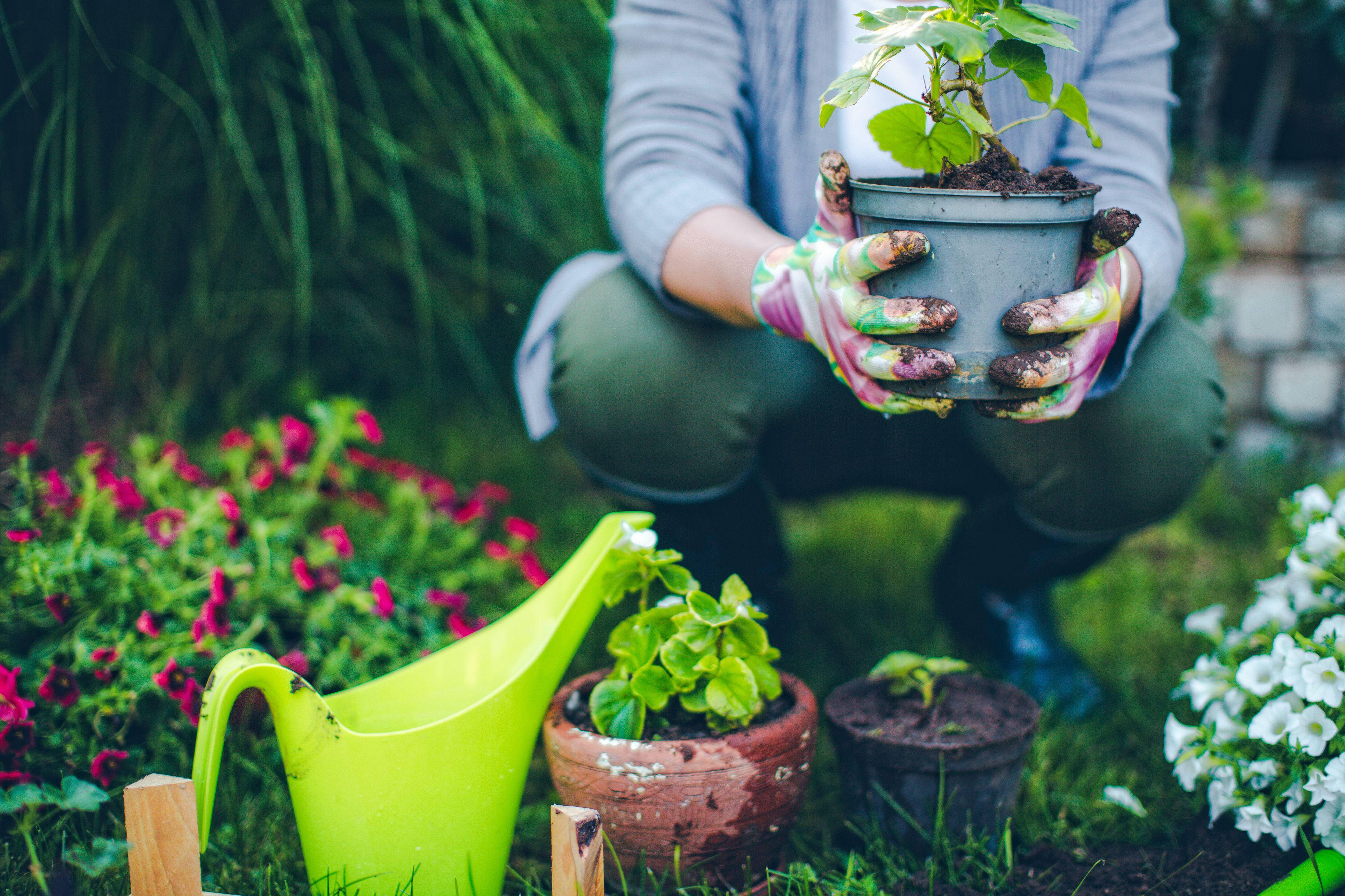 The 7 Best Gardening Books Of 2019
