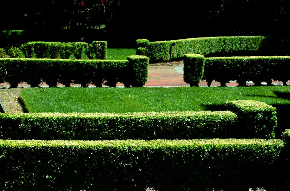 Formal landscape with boxwood hedges.