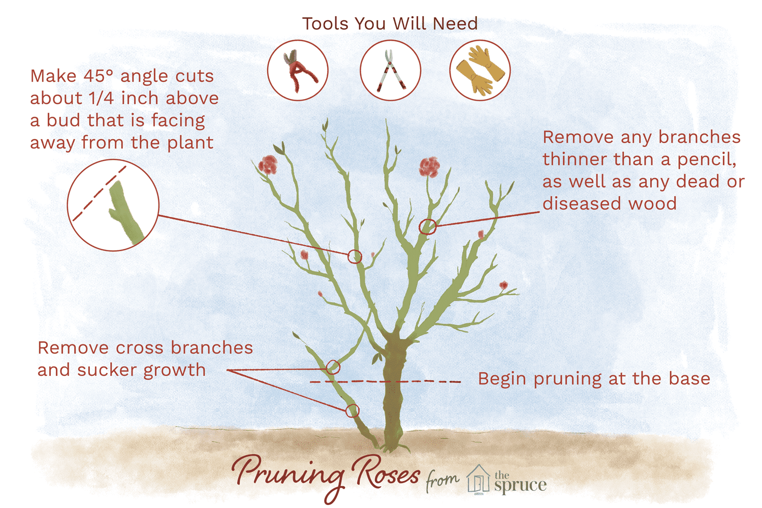 How And When To Prune Roses