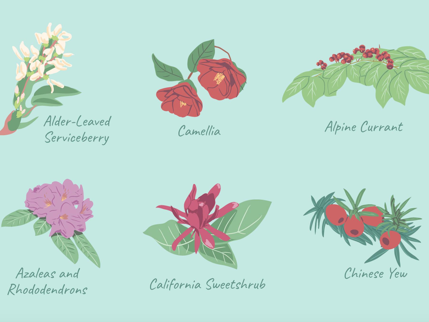 29 Best Shrubs For Shade Gardens