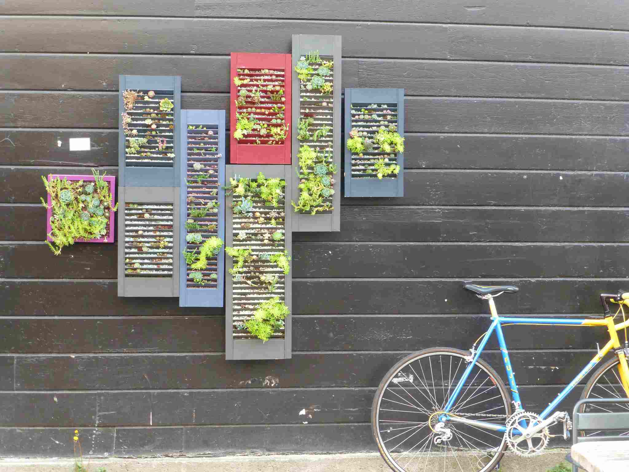 Living wall grown on shutters hanging on a wall near a bicycle.