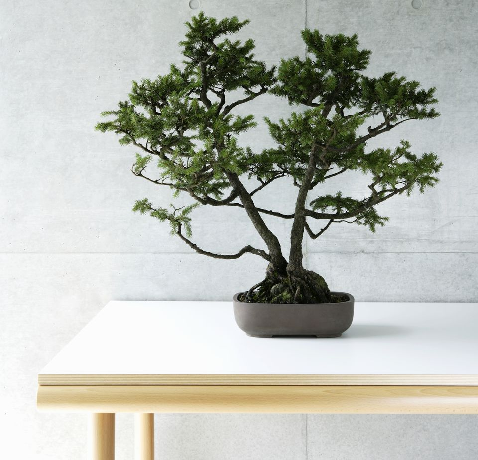 Bonsai tree in a pot sitting on a white table.