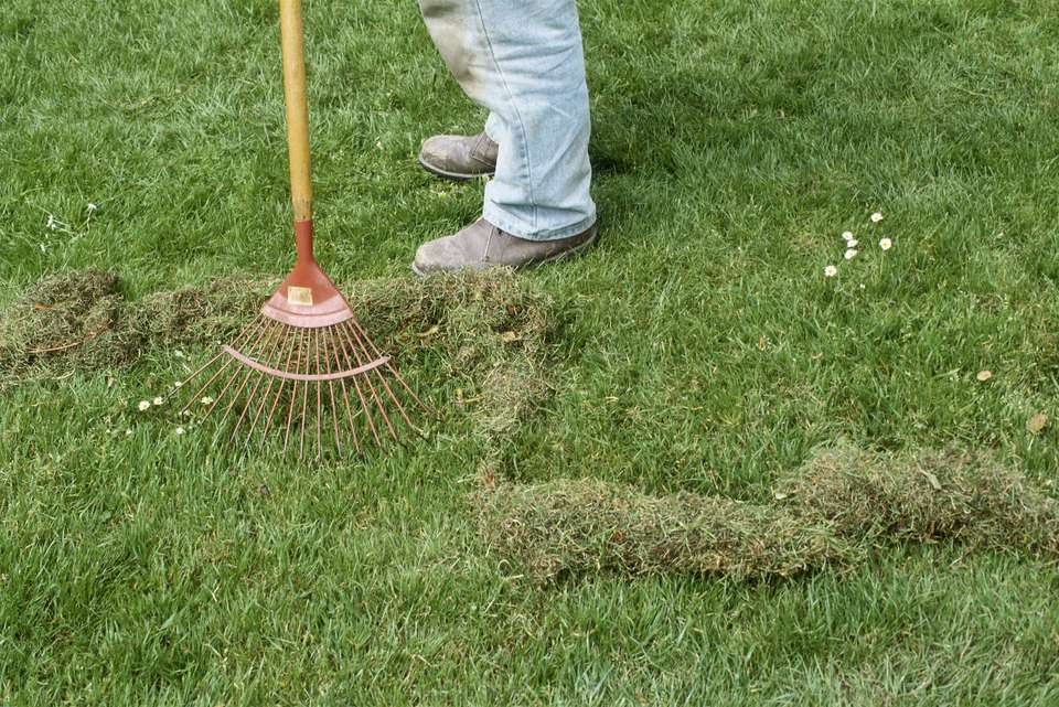 Man raking moss off lawn.