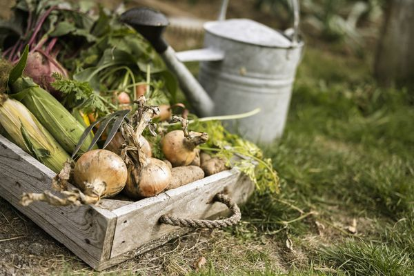 A garden harvest