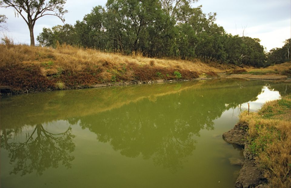 Green water indicating eutrophication and excessive algae growth, Condamine River, Queensland, Australia