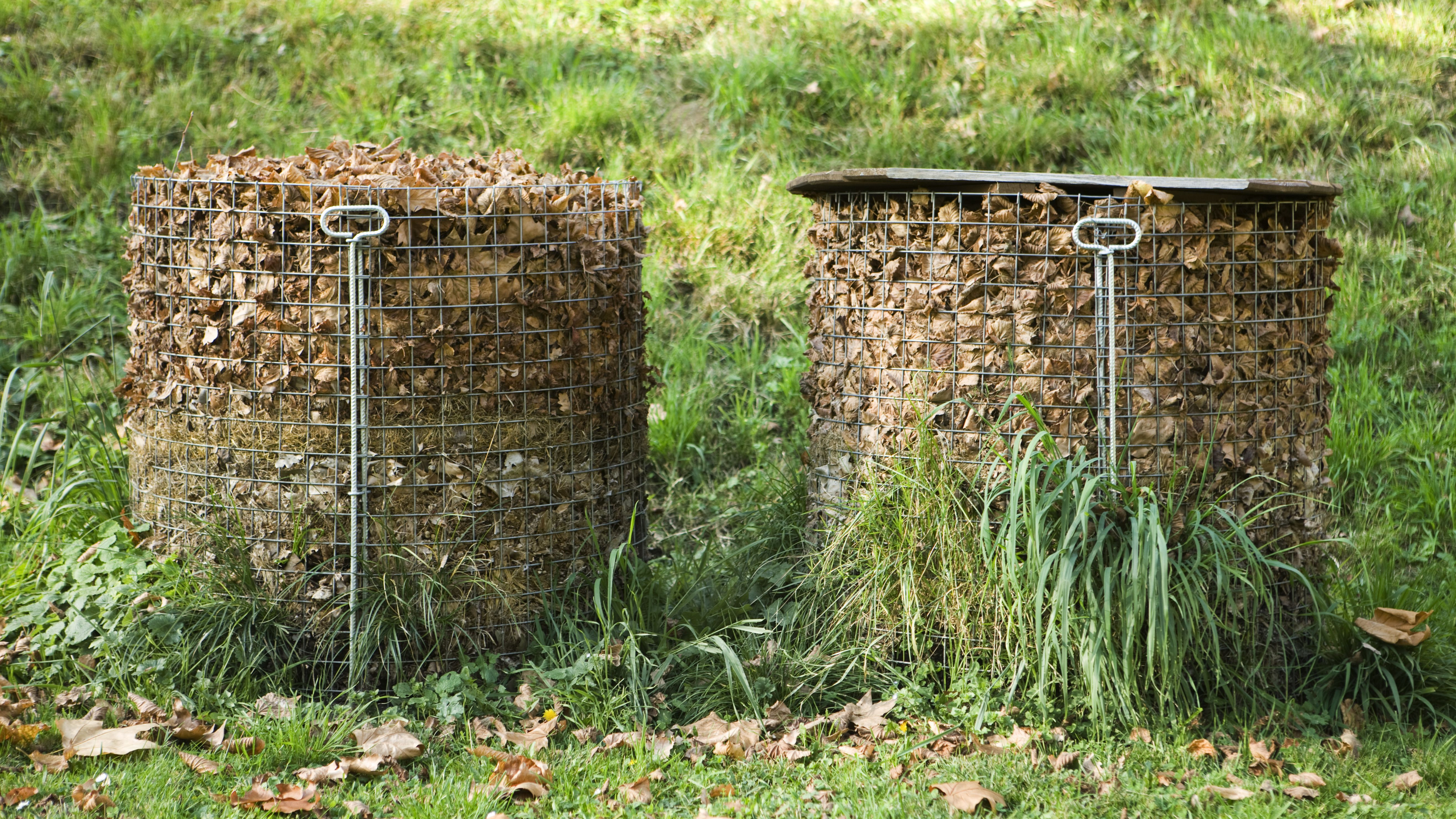 How To Make And Use Leaf Mold