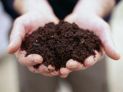 Person holding handfull of soil