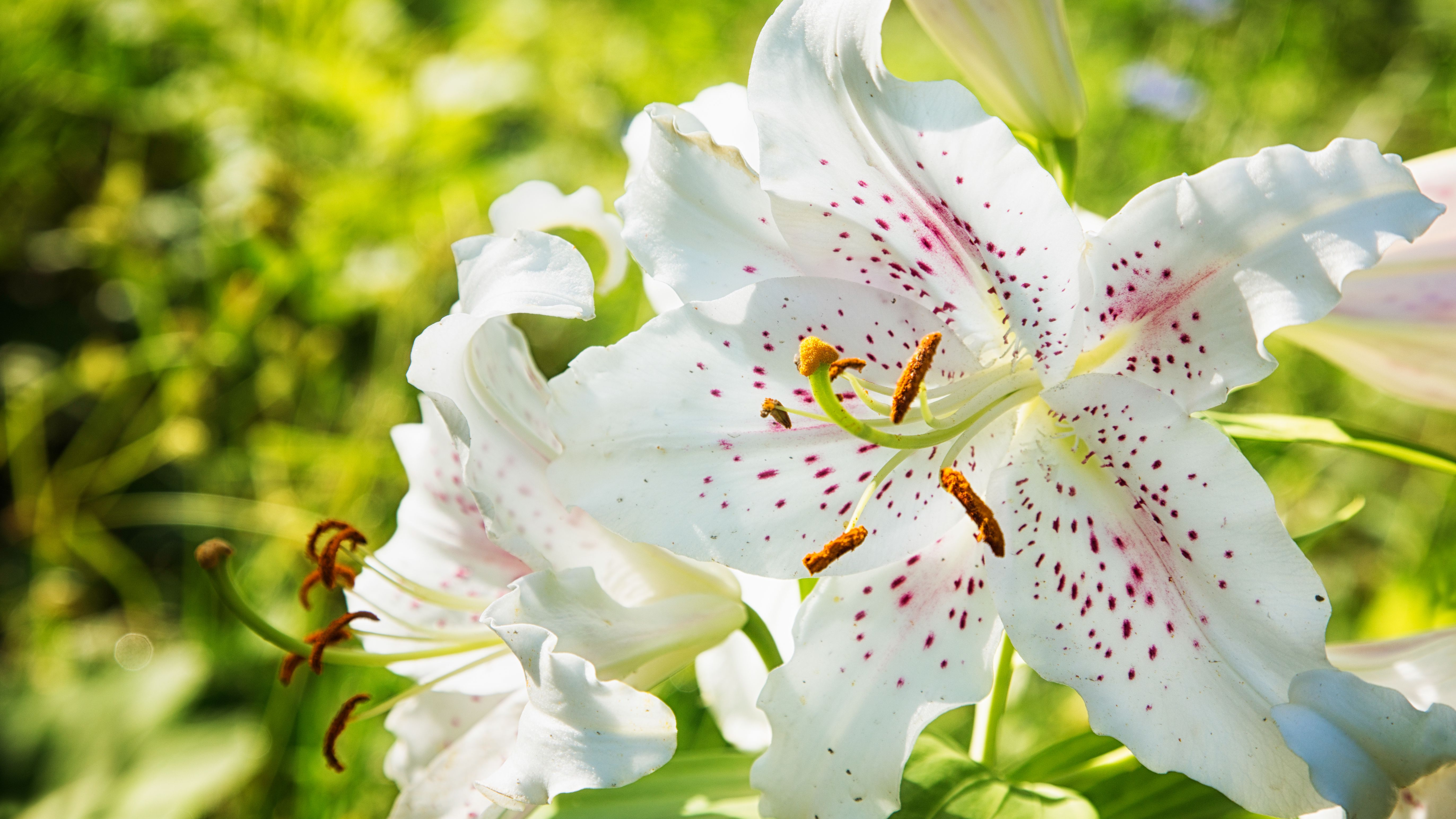 9 Lily Types To Grow In The Garden