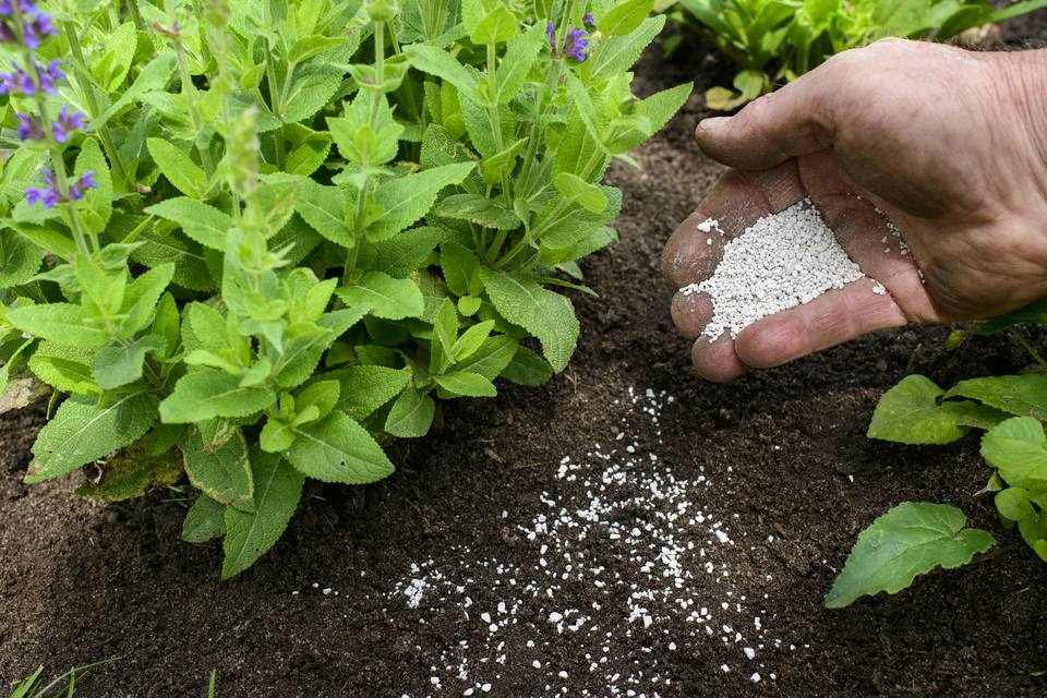 adding fertilizer to garden