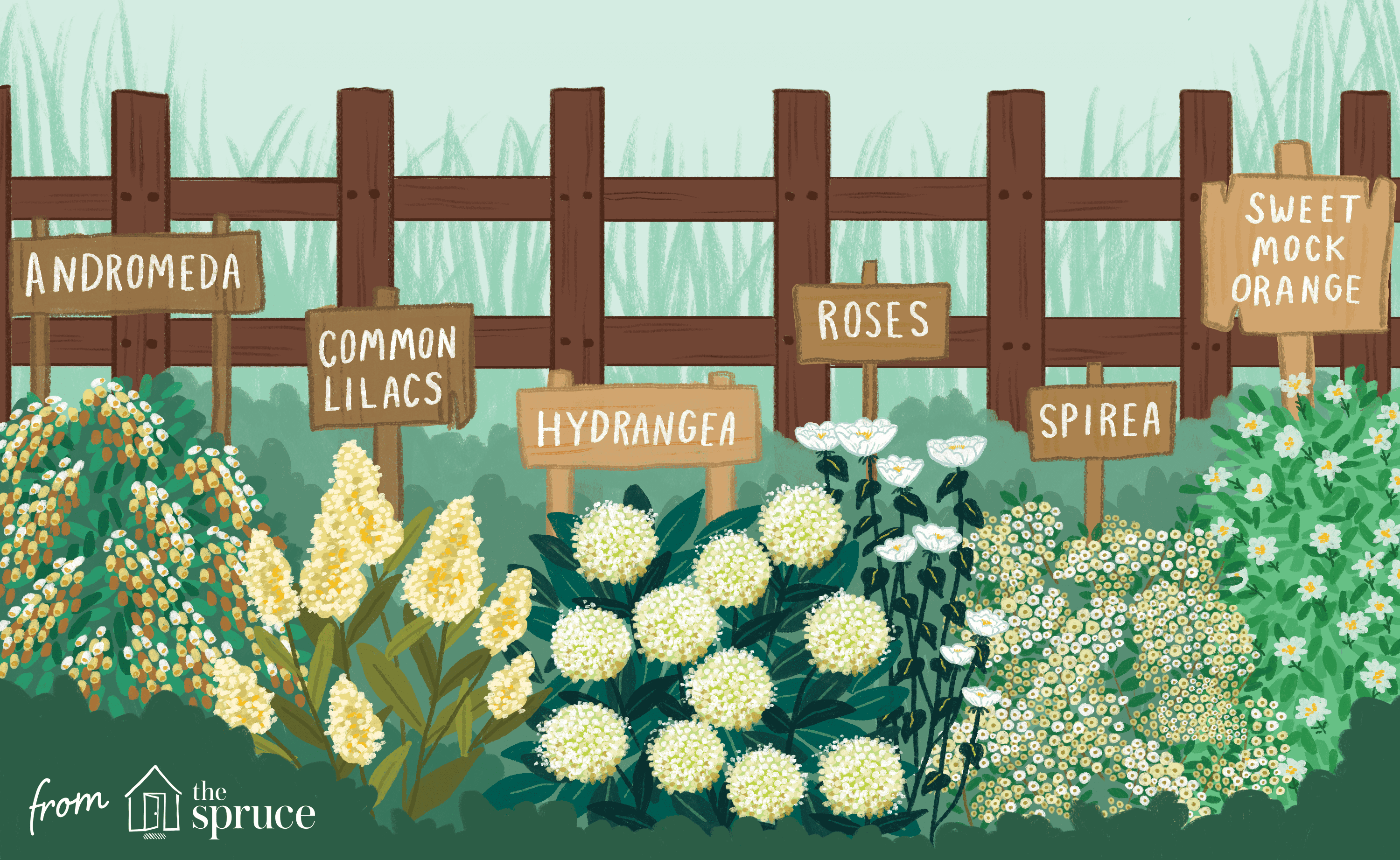 illustration of shrubs with white flowers
