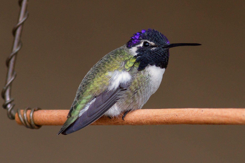 Make A Hummingbird Swing Diy Project