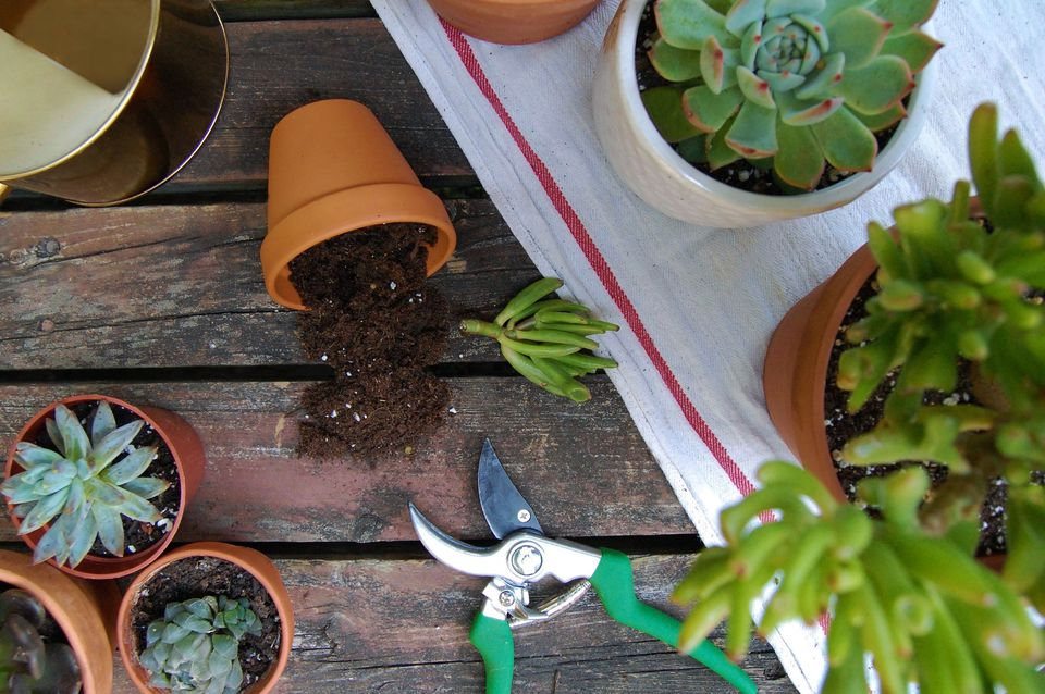 A flatlay concept depicts succulent cuttings, terracotta pots, and pruning shears on a brown deck.