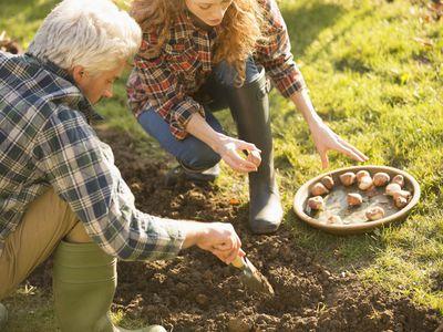 Couple planting bulbs in garden