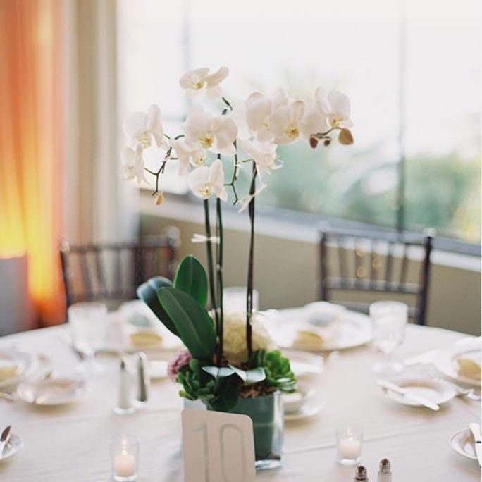 Potted Orchid Winter Wedding Centerpiece