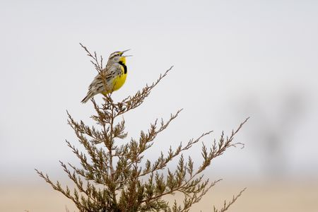 about bird songs - Animals Singing Christmas Songs