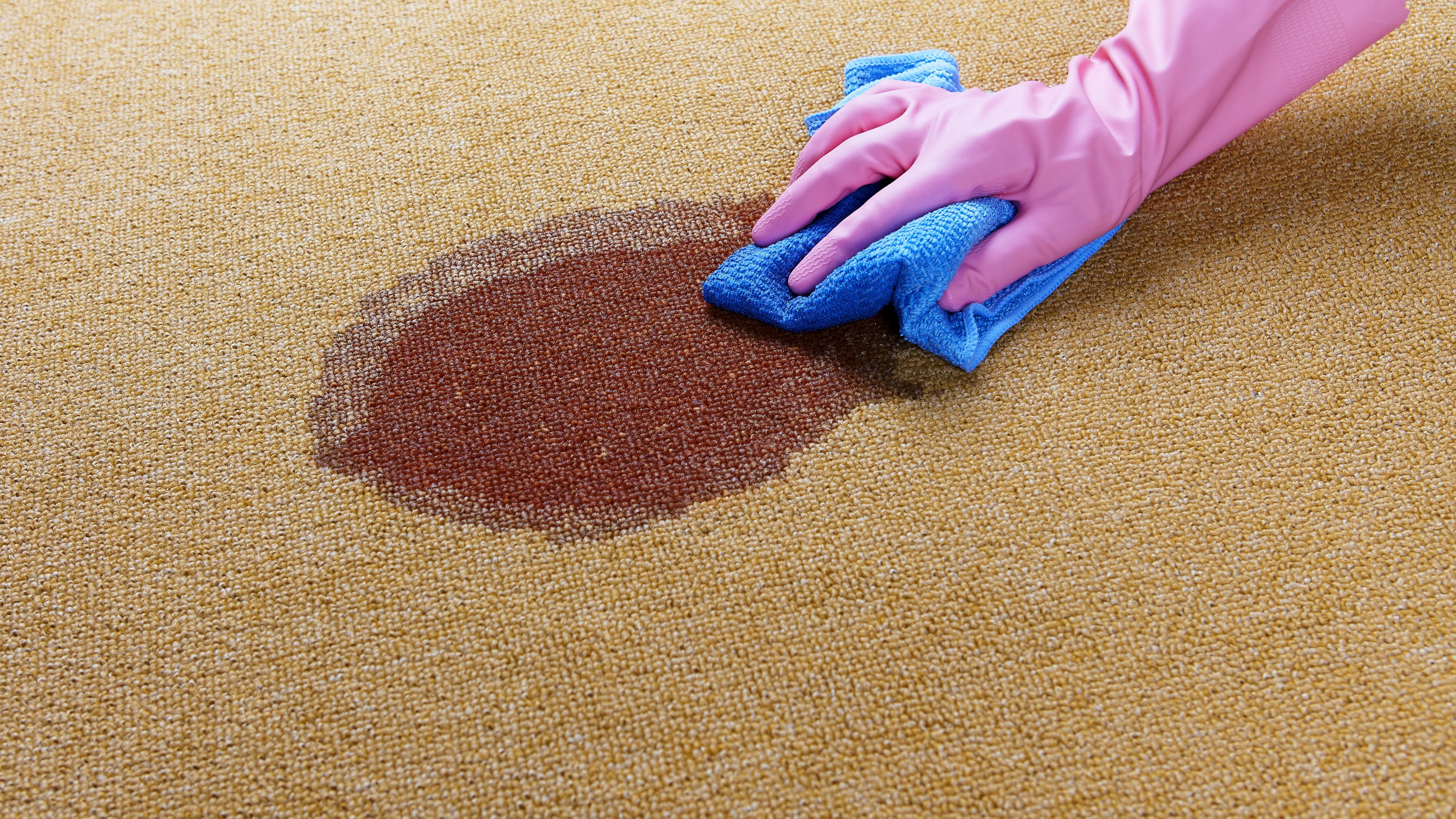 Human Urine Stain Removal Carpet Www Resnooze Com