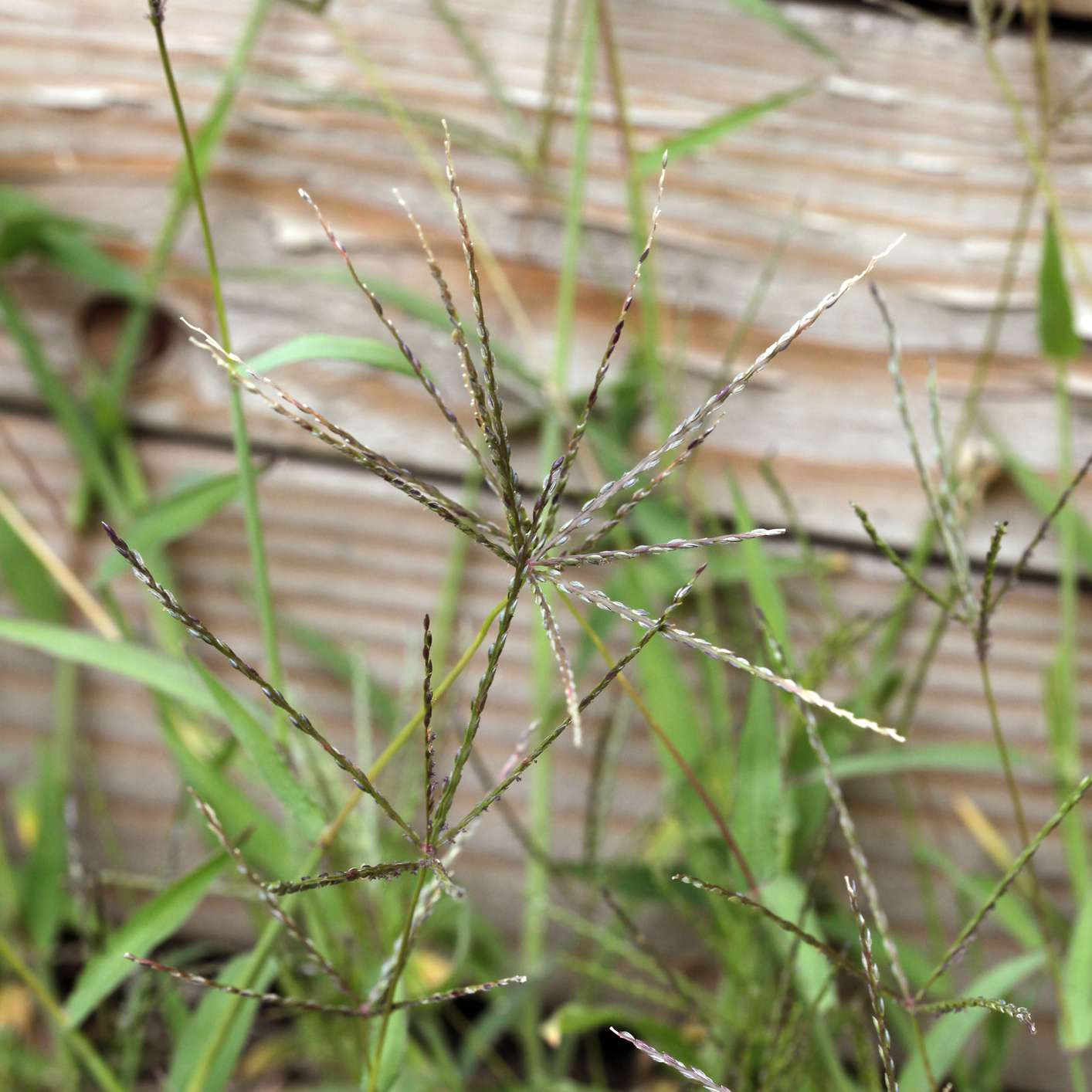 17 Common Types Of Weeds