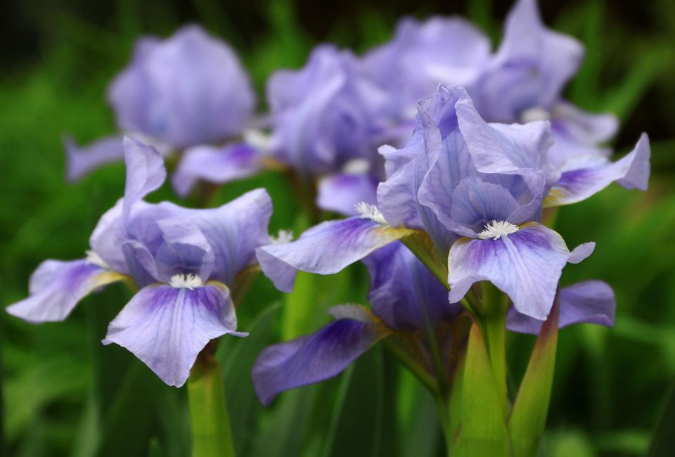 Perennial plants to cut back in the fall mightylinksfo
