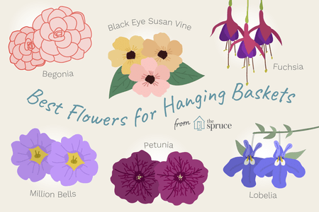 11 Best Flowers To Use In Hanging Baskets
