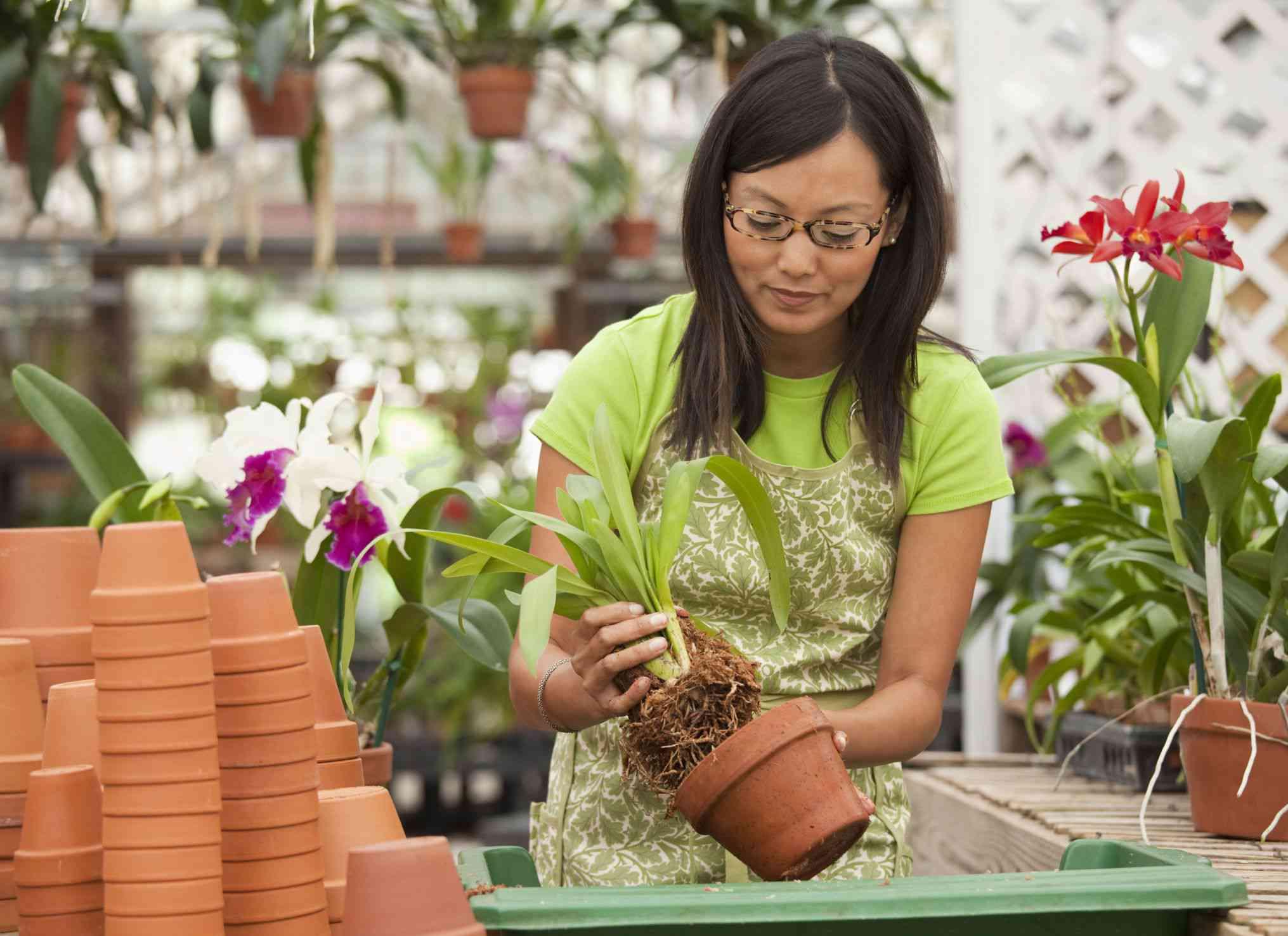 Orquídeas trasplantes