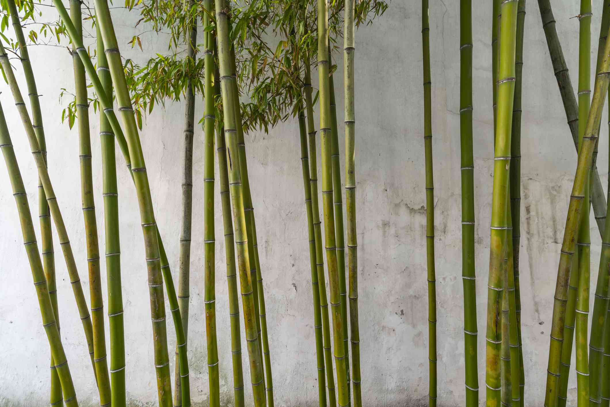 Close-Up Of Bamboo Forest