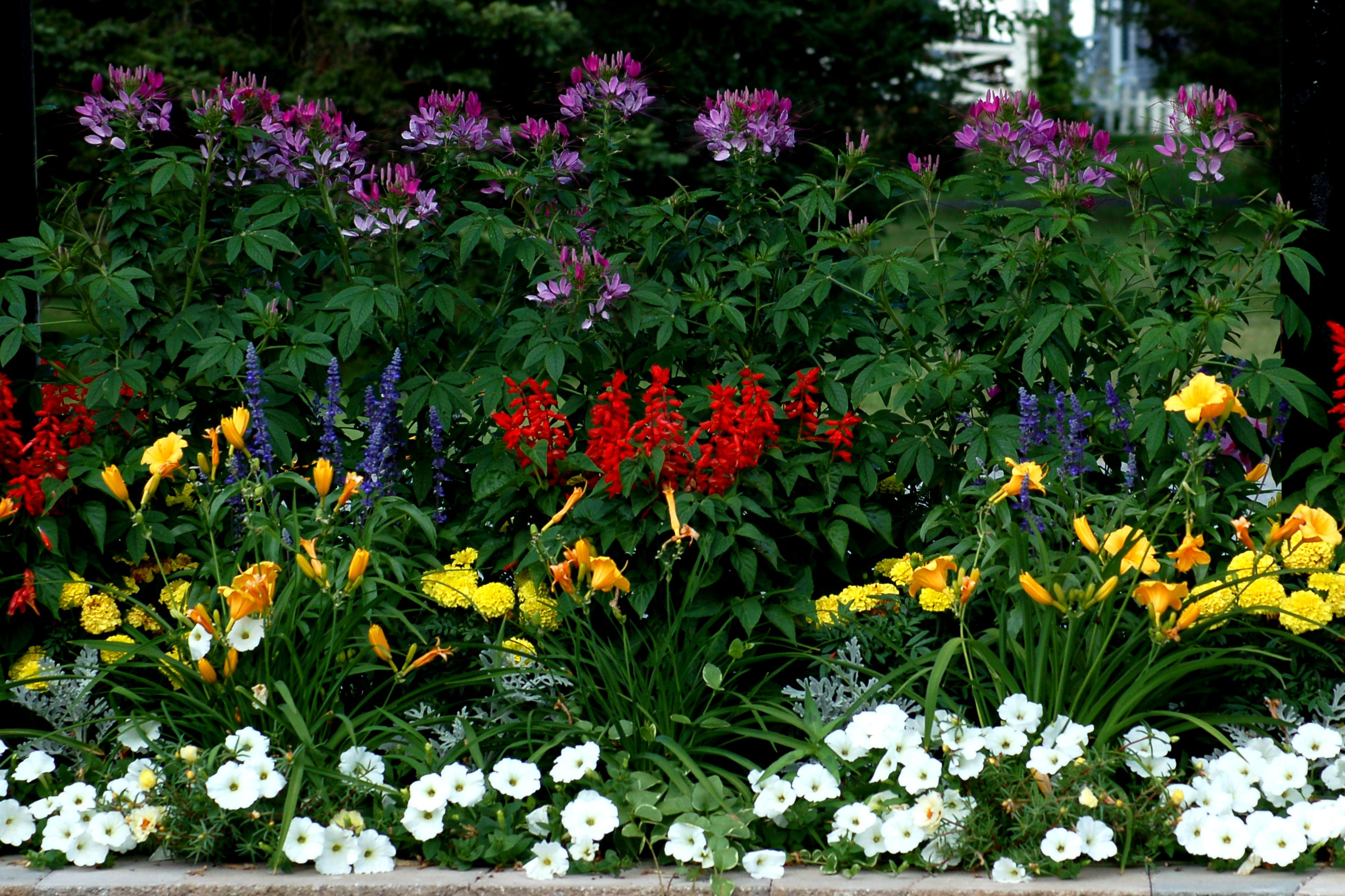 Layered flower borders look neater. Plus the tall plants don't shade the small ones.