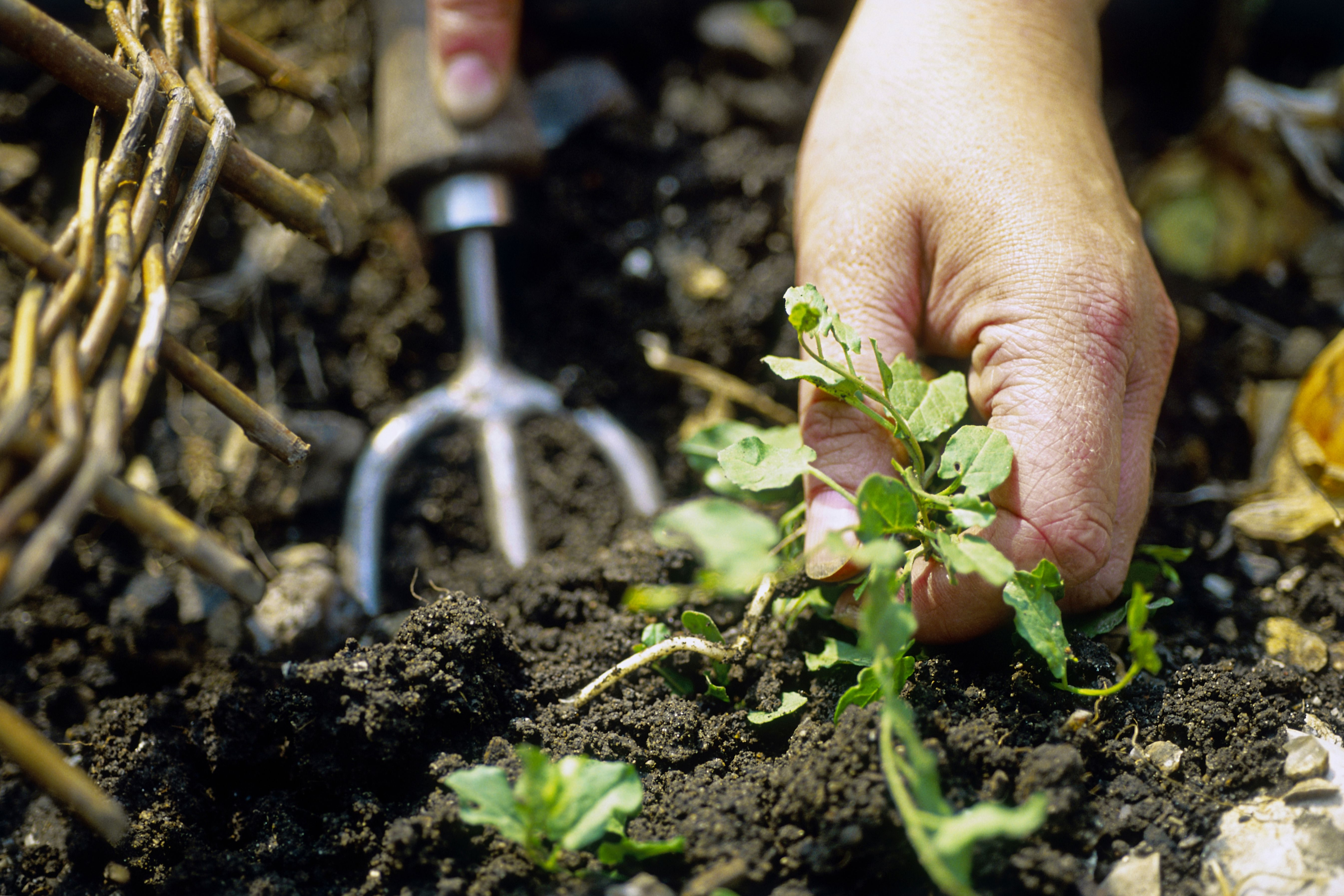 Soil Borne Diseases And How To Effectively Treat Them